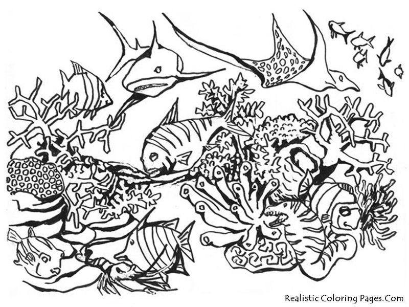 ocean coloring pages for elementary