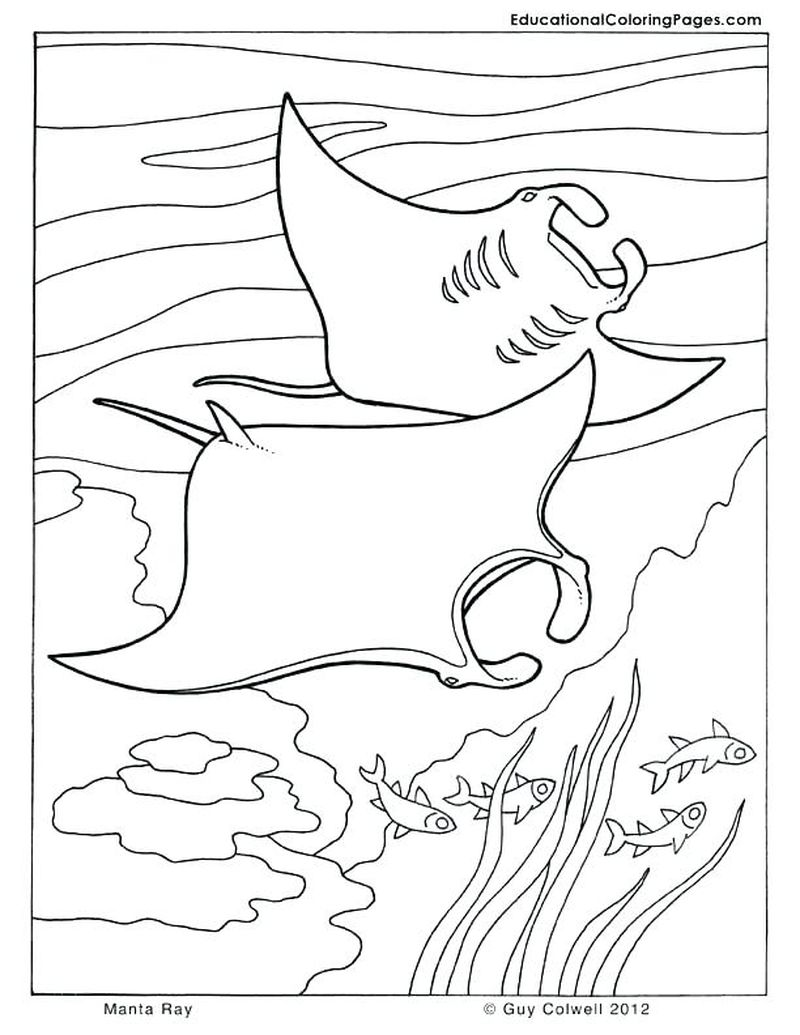 ocean dolphin coloring pages