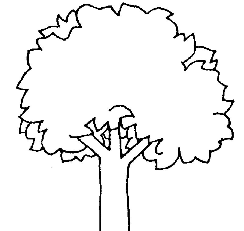 palm tree coloring pages for adults