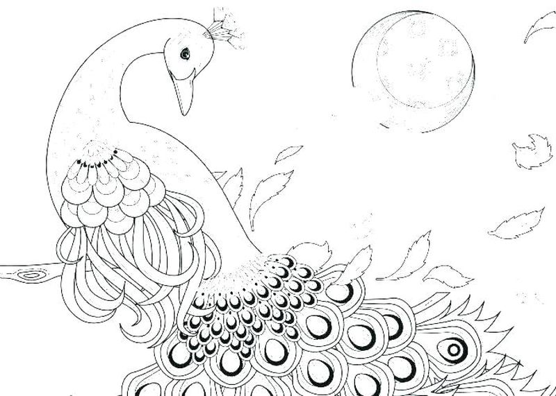 peacock coloring pages for preschoolers