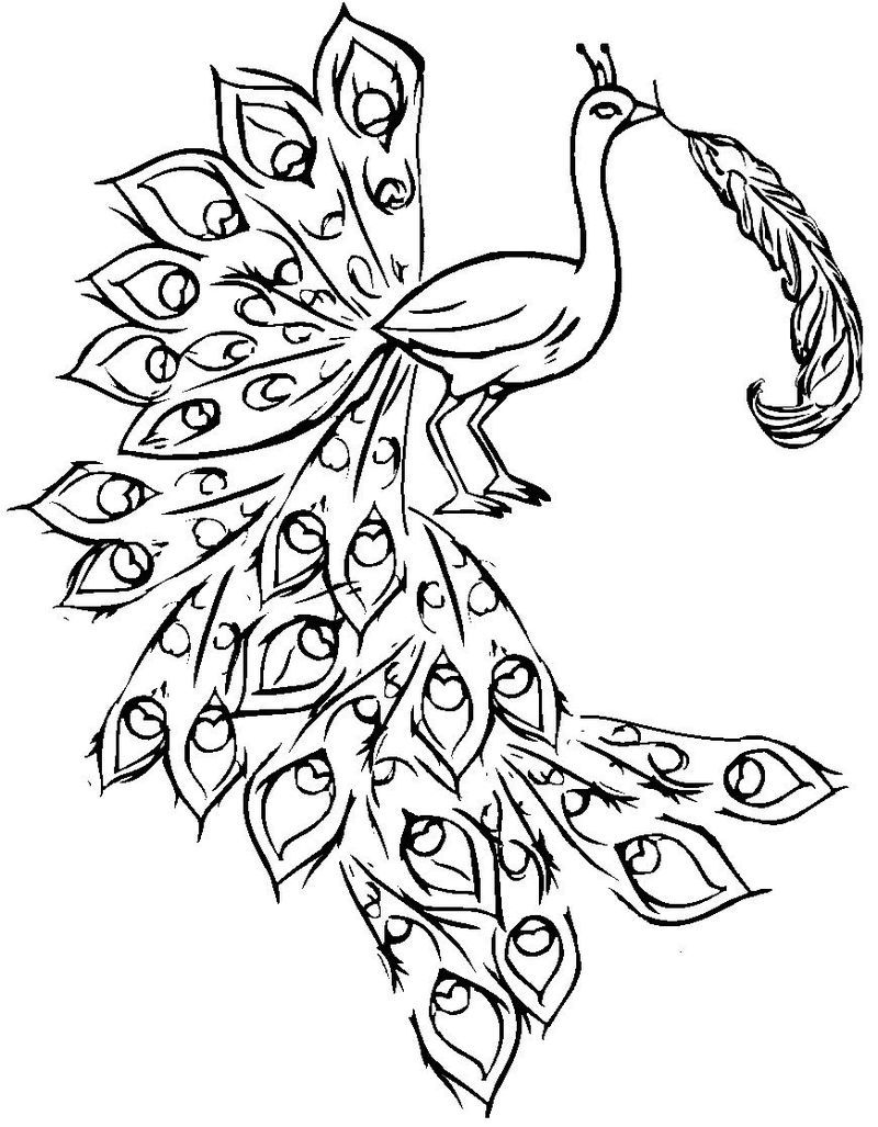 peacock colouring pages for adults
