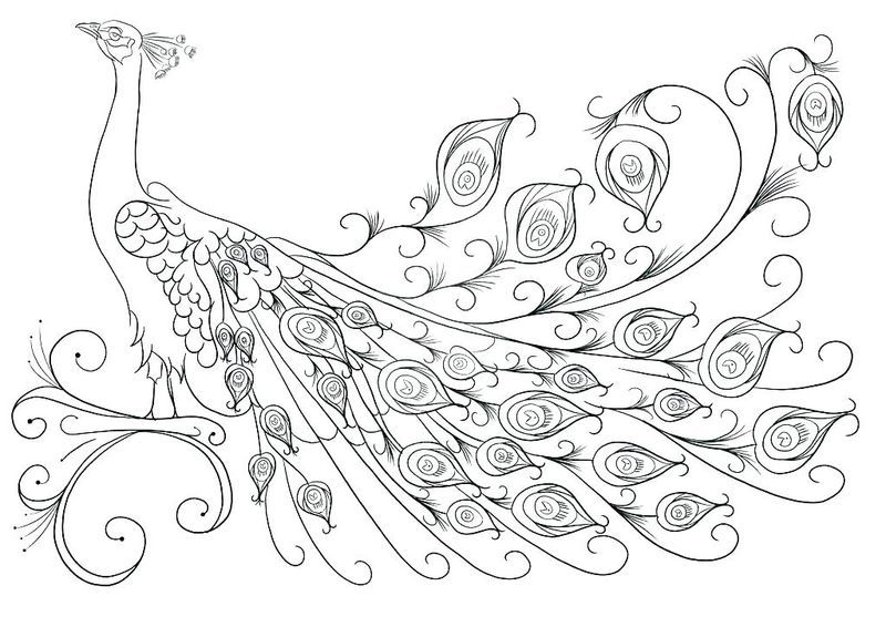 peacock colouring pages printable