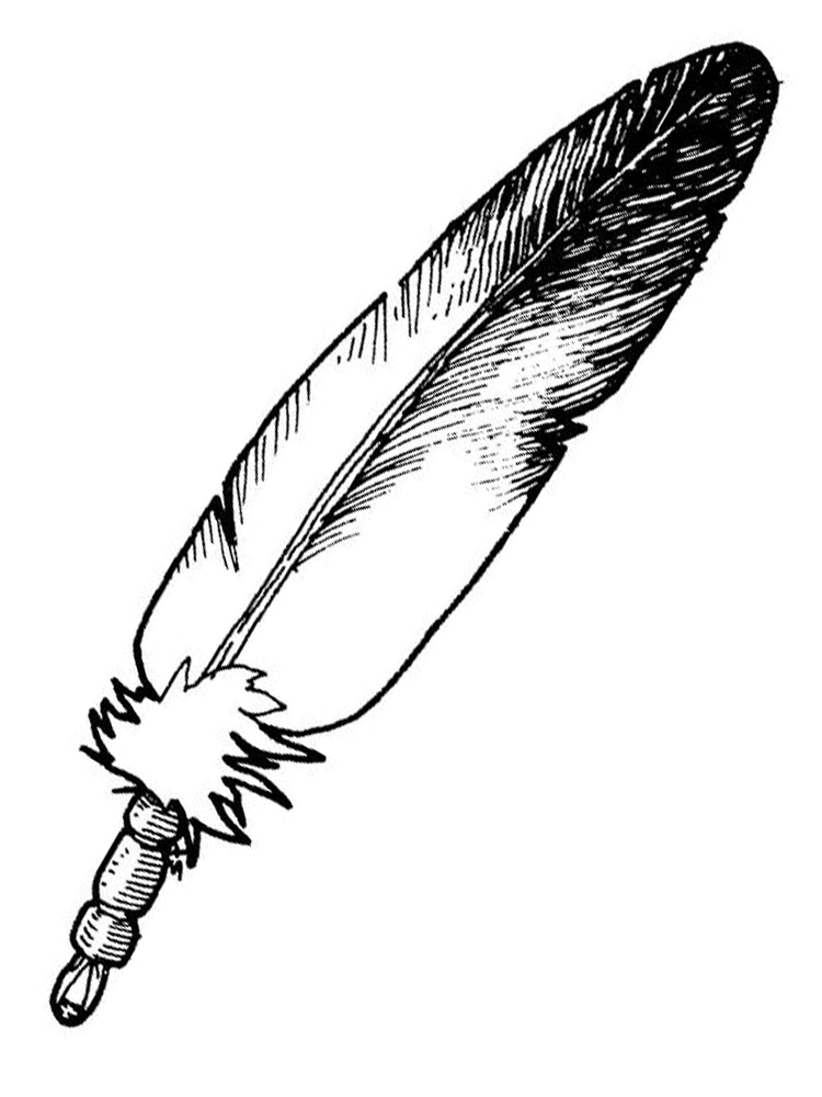 peacock feather coloring page printable