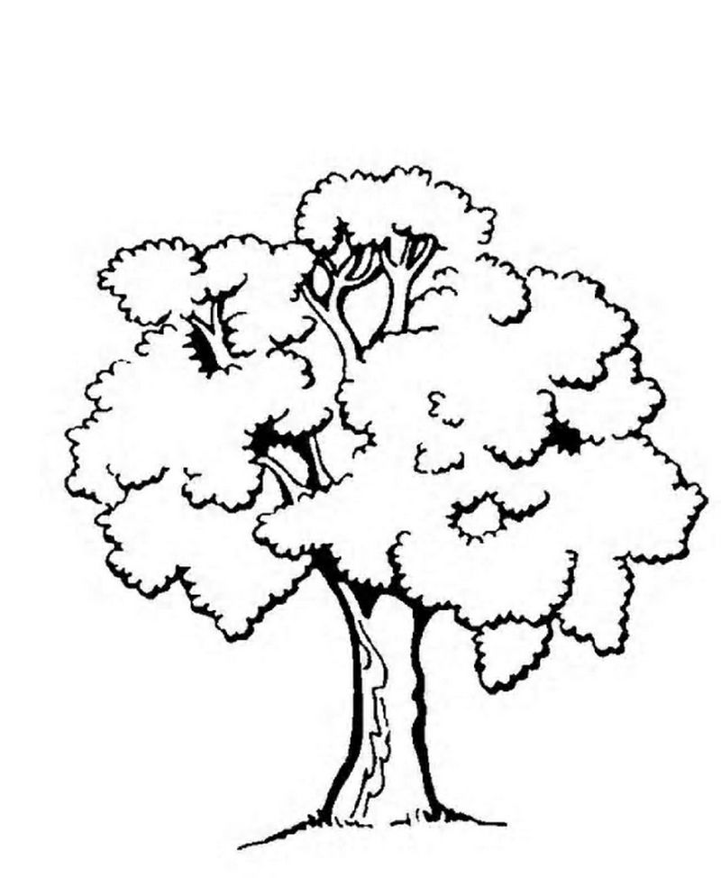 pine tree coloring pages free