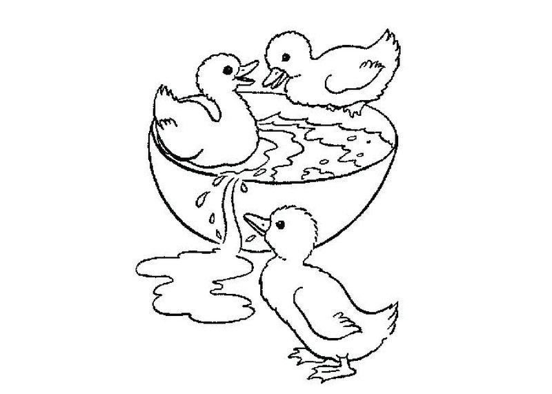 printable baby donald duck coloring pages