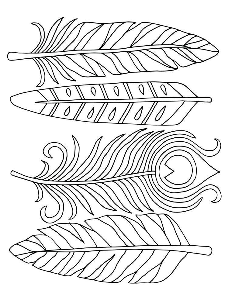 printable feather coloring page zentangle