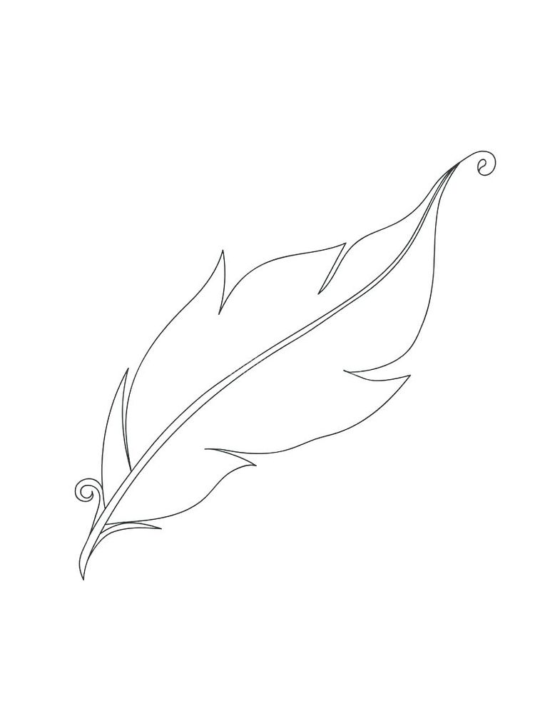 printable feather coloring pages for adults
