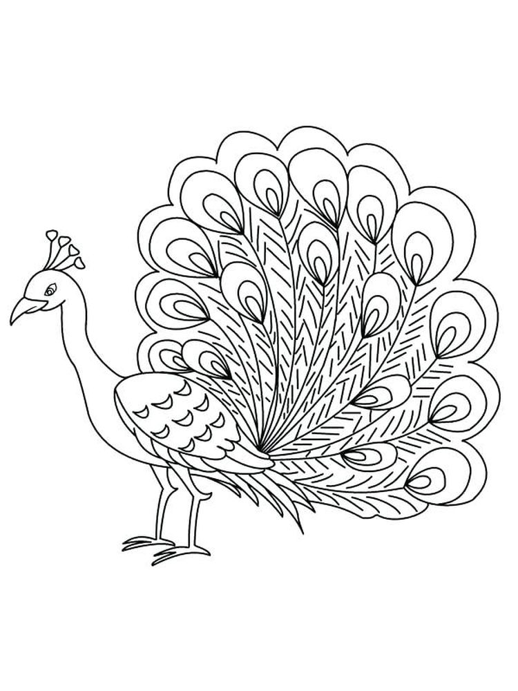 printable feather coloring pages free