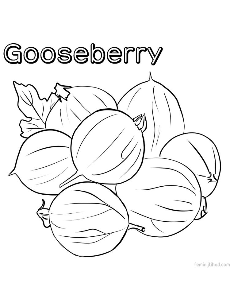 printable gooseberry coloring pictures print