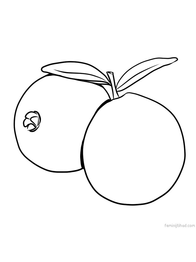 printable guava picture for coloring page
