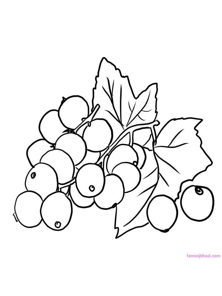printable red currant black and white