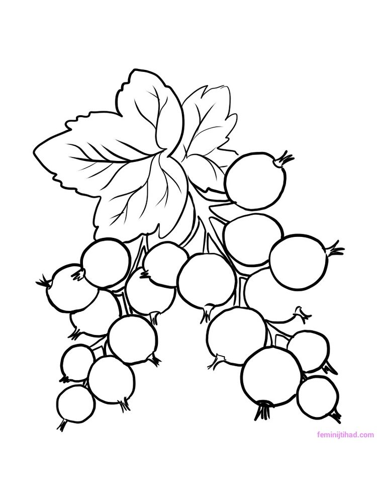 printable red currant coloring page