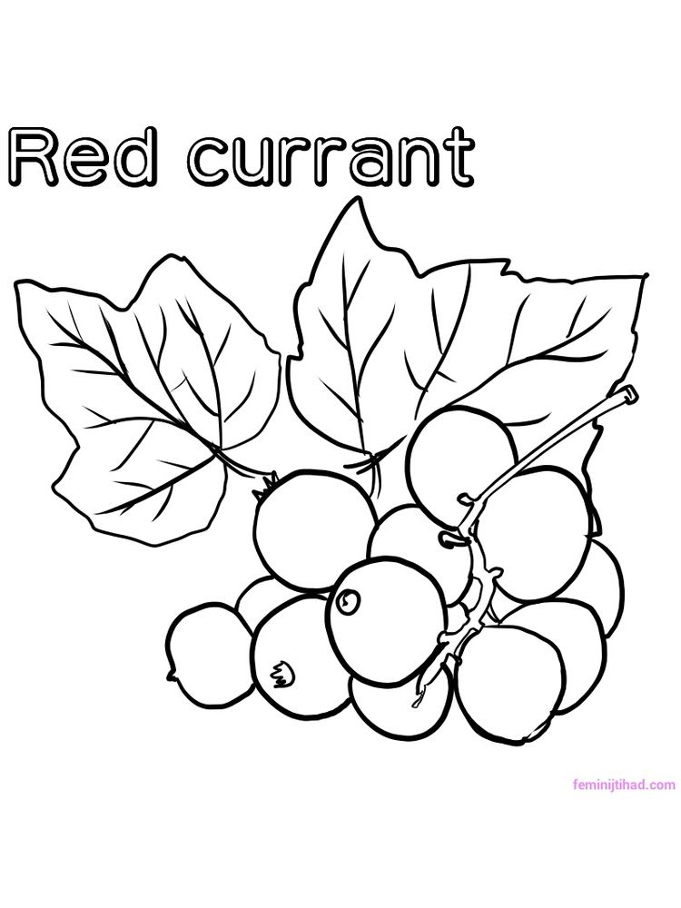 printable red currant