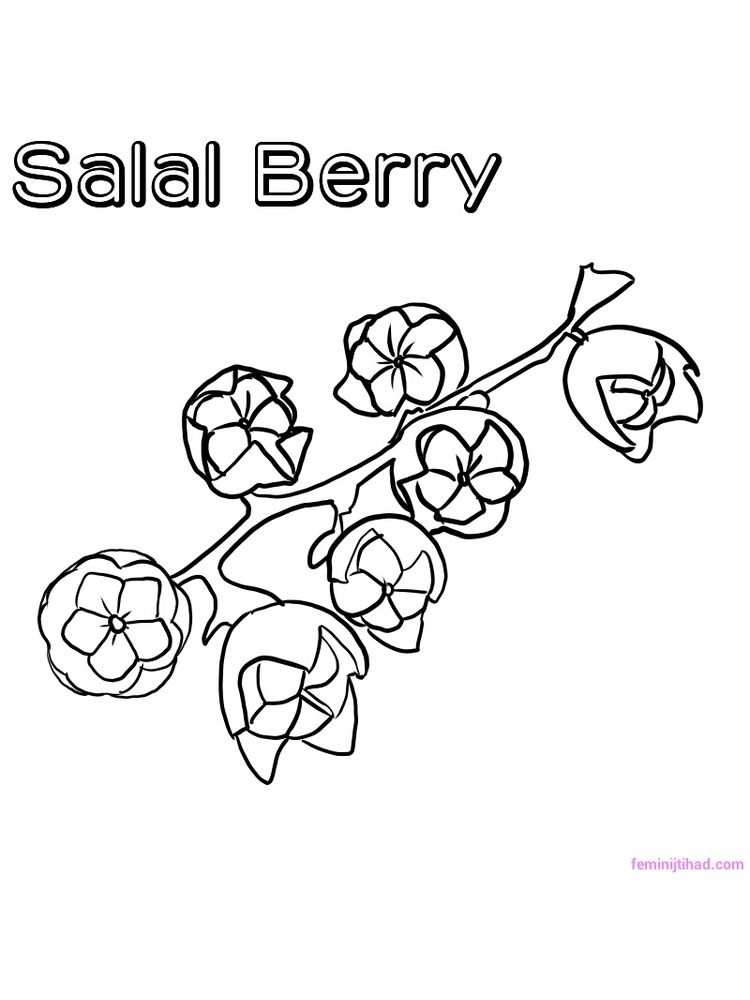 printable salal berry coloring page