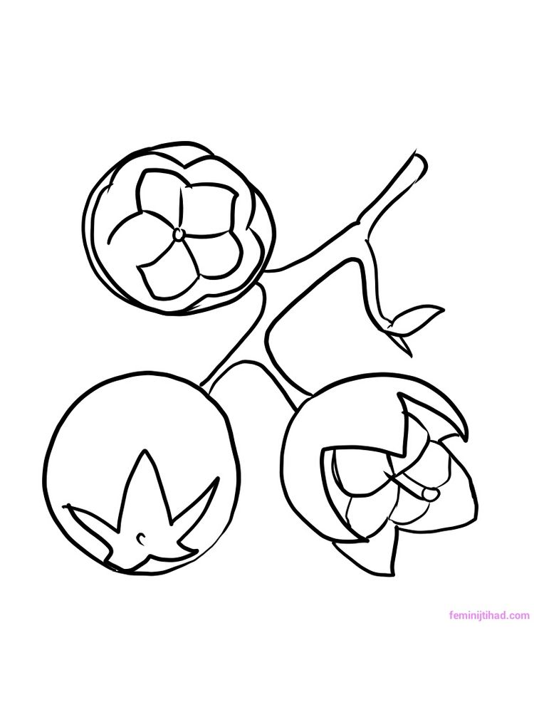 printable salal berry coloring pages