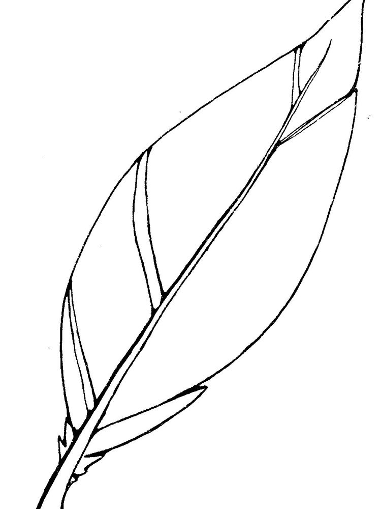 printable simple feather coloring page