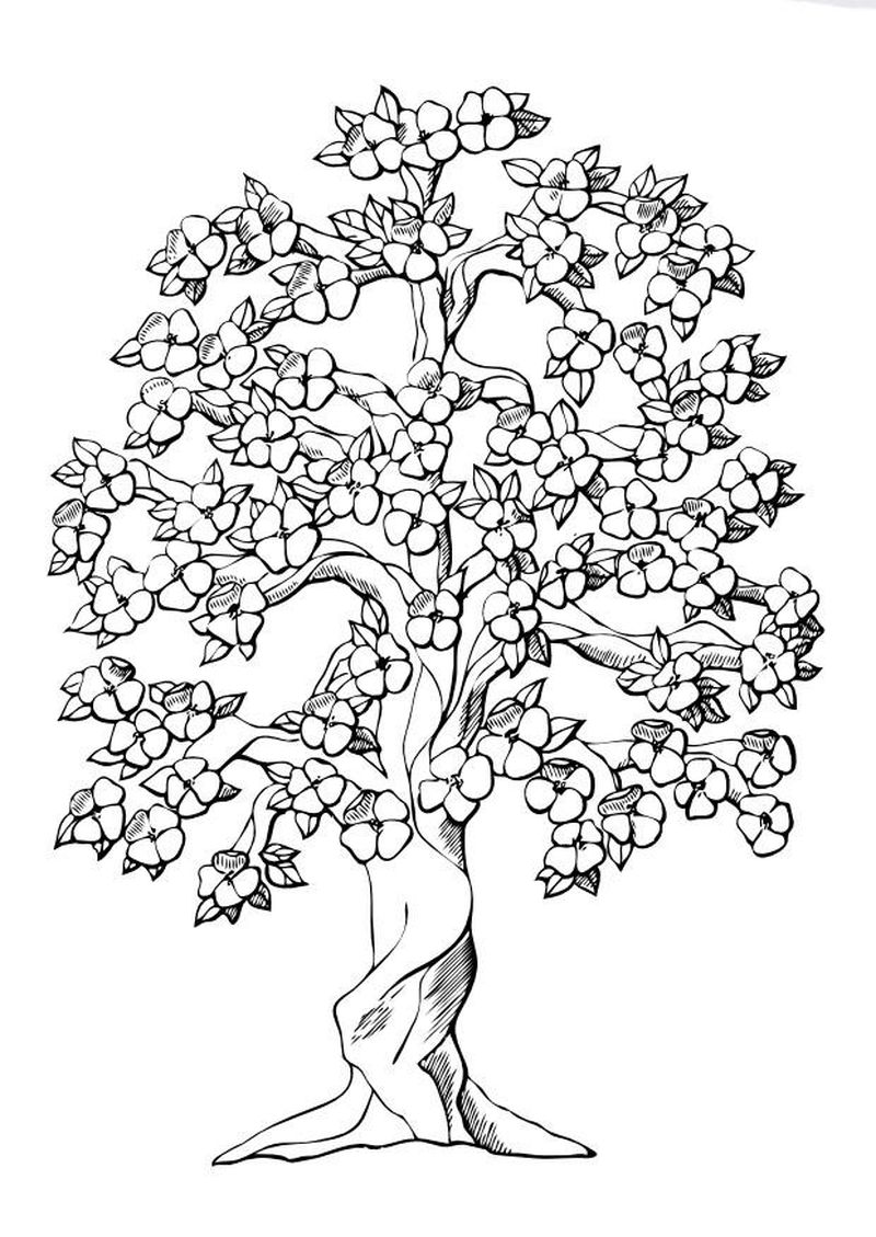 tree coloring book pages