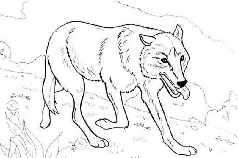 wolf coloring book pages free