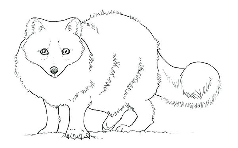 PRINTABLE fox coloring pagesPrintable