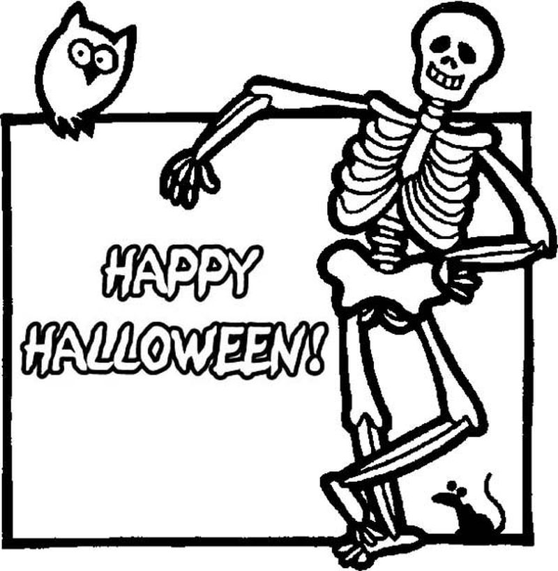 anatomy skeleton coloring pages skull