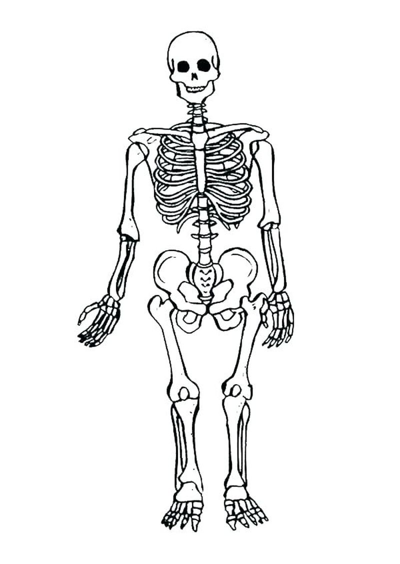 baby belly skeleton coloring pages