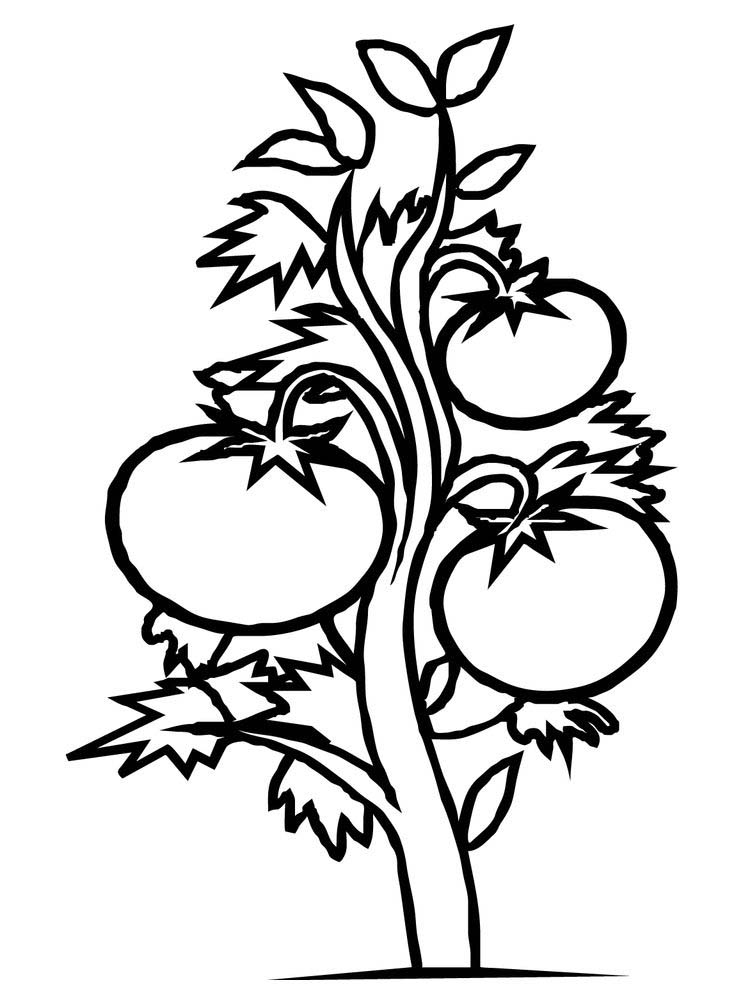 bean plant coloring page printable