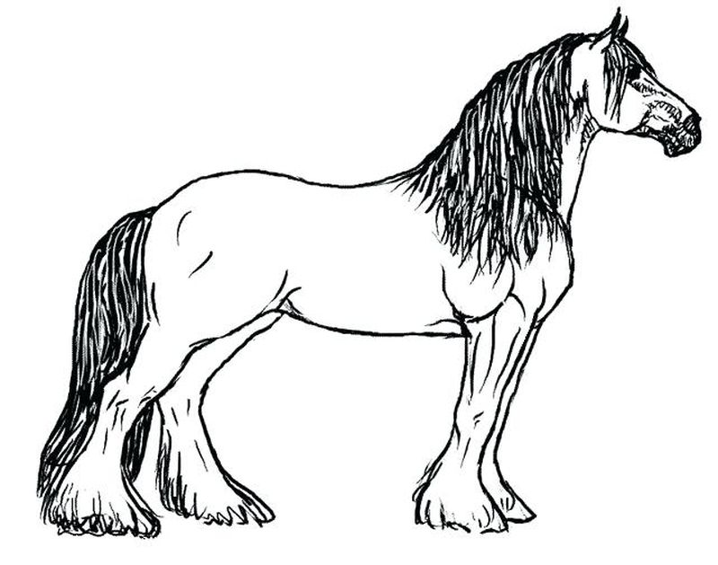 coloring page of a horse printable