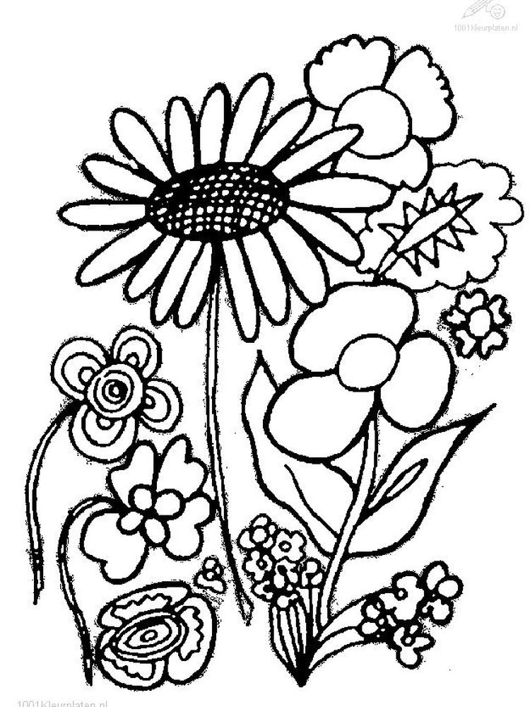 coloring page of a plant print