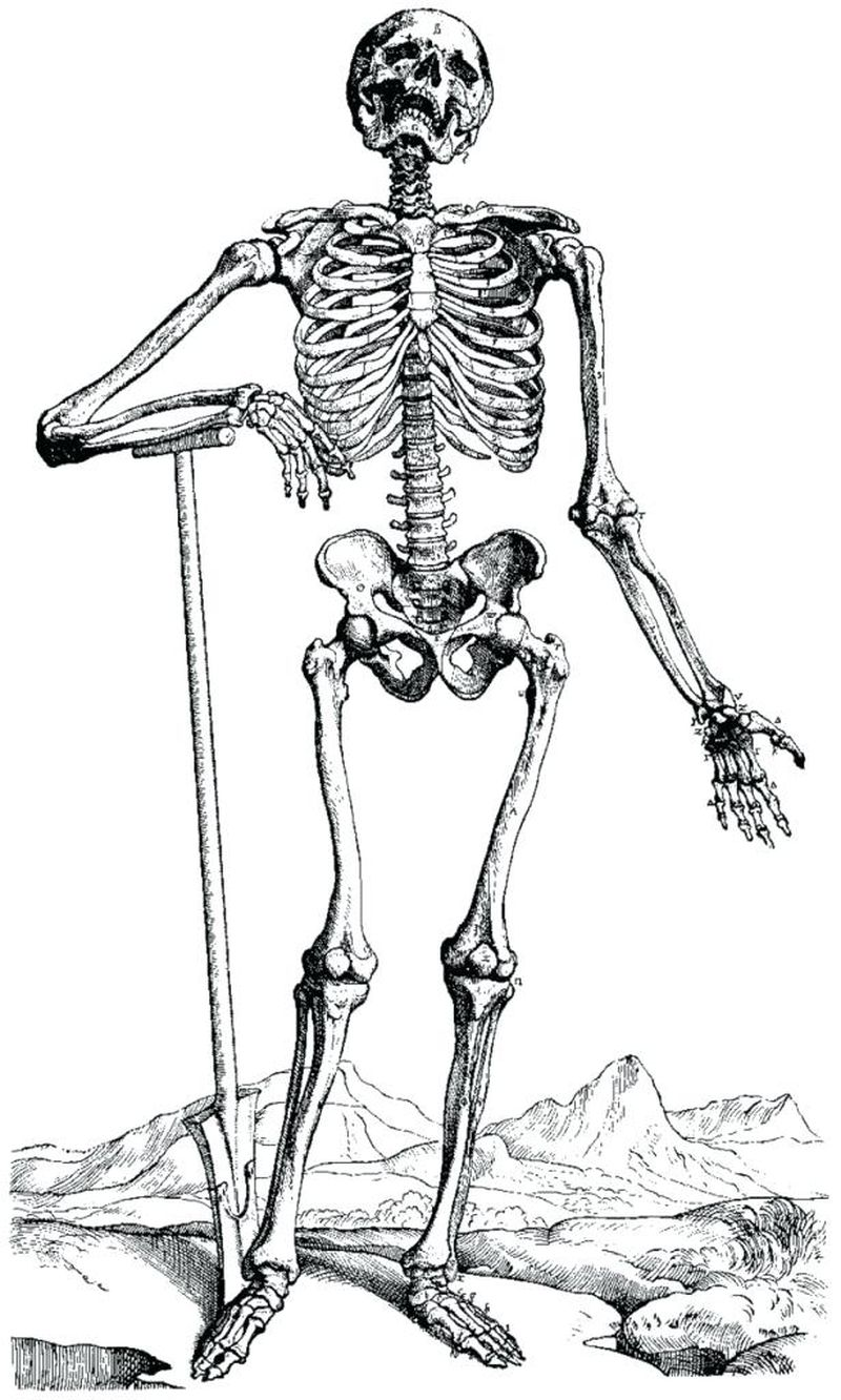 coloring pages for adults skeleton halloween Printable
