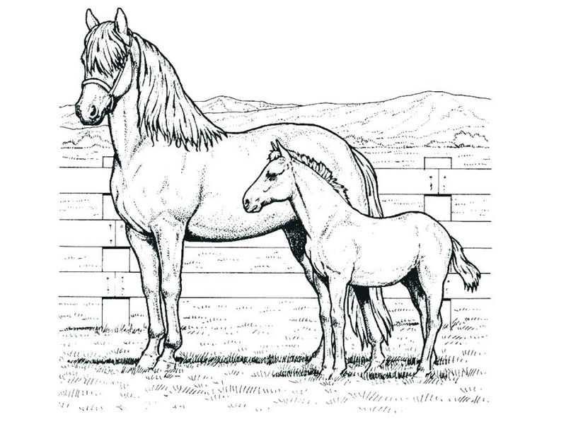 coloring pictures horses