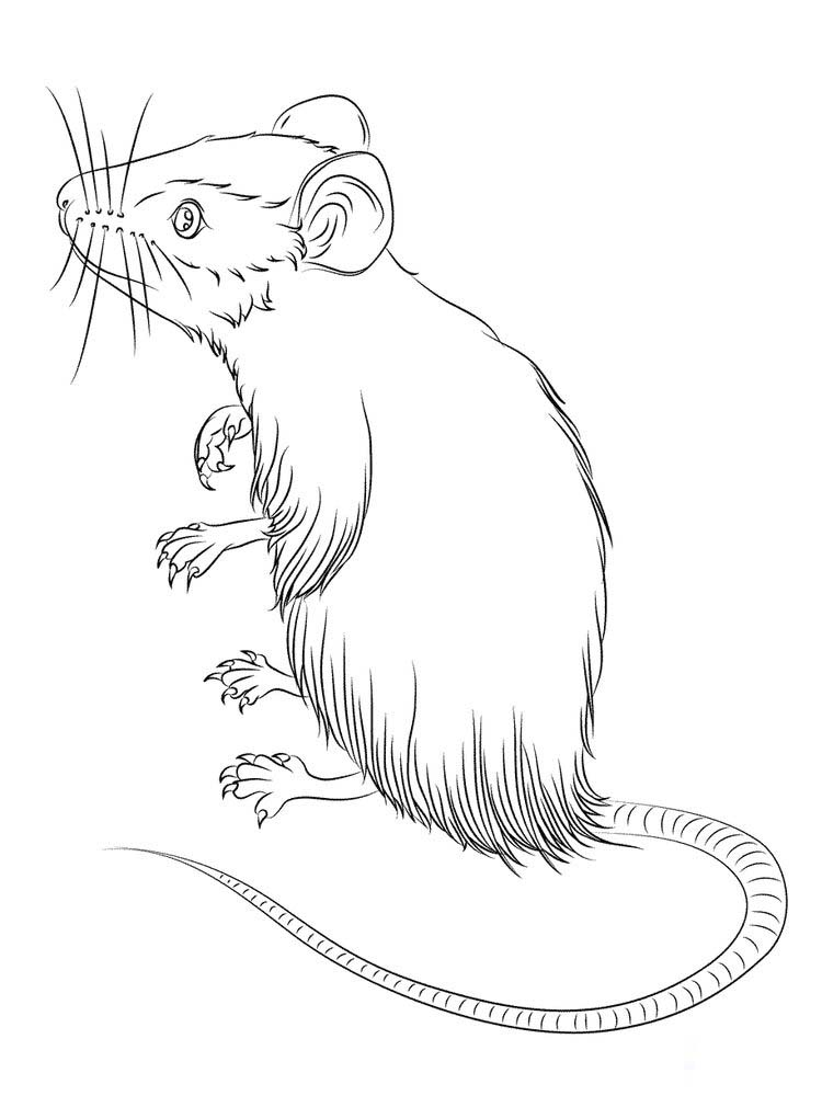 cute mouse coloring page Printable