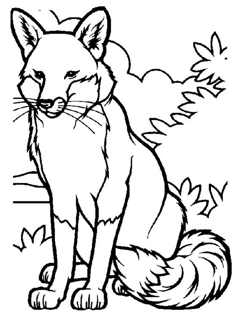 fox coloring pages freePrintable