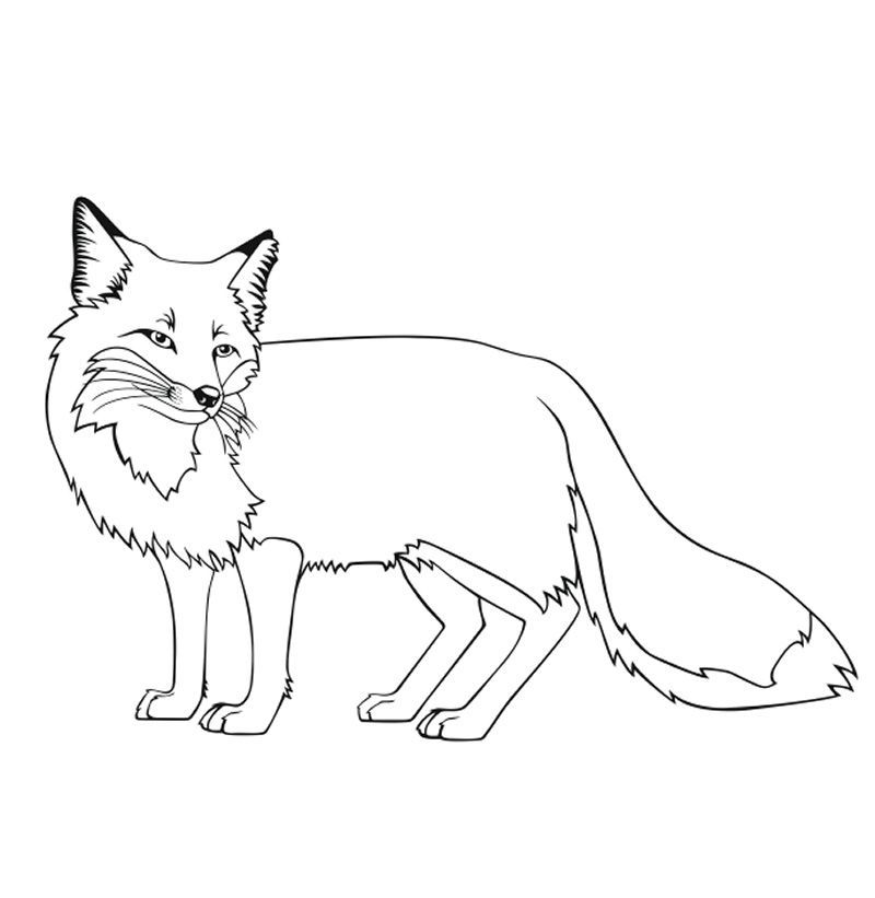 fox coloring pages onlinePrintable