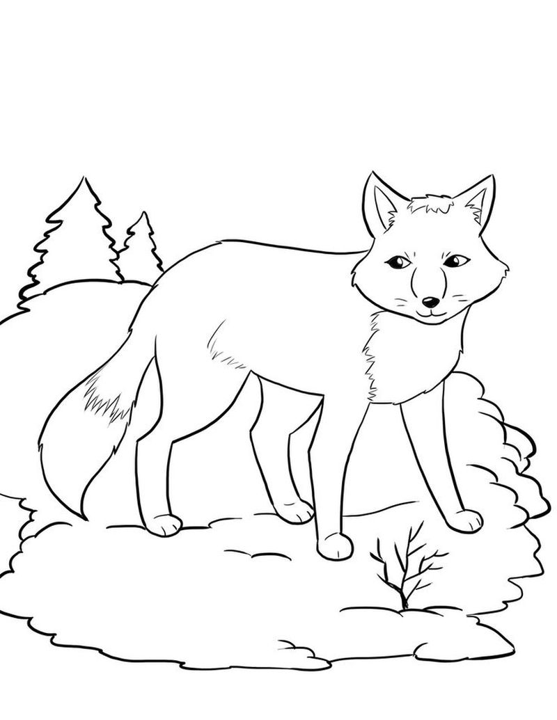 free fox coloring pagesPrintable