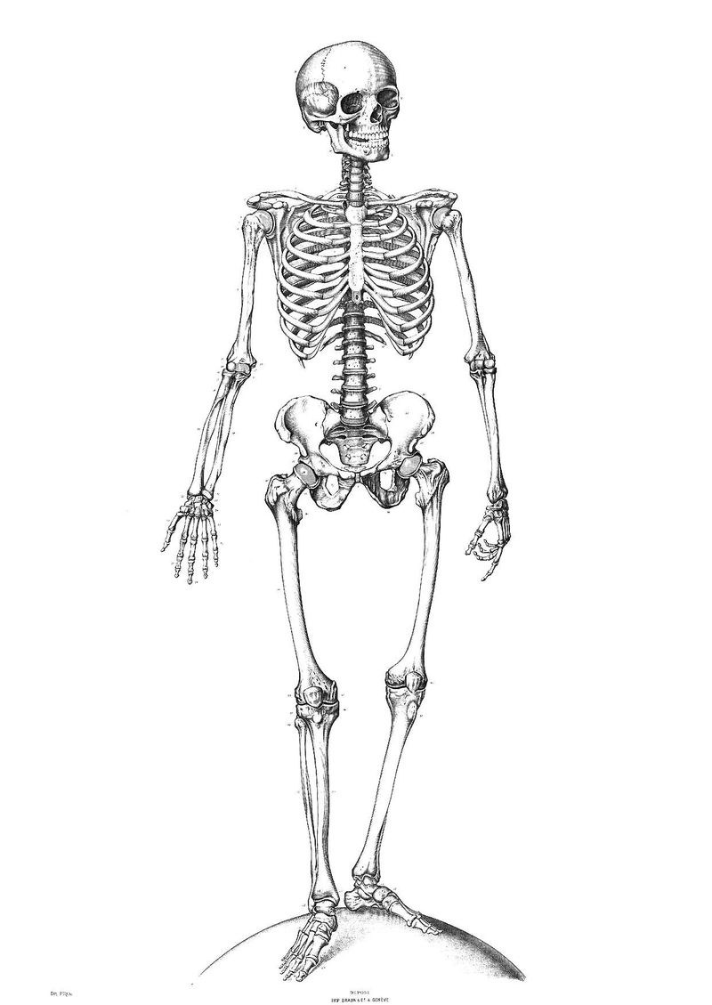 labeled dog skeleton coloring pages Printable