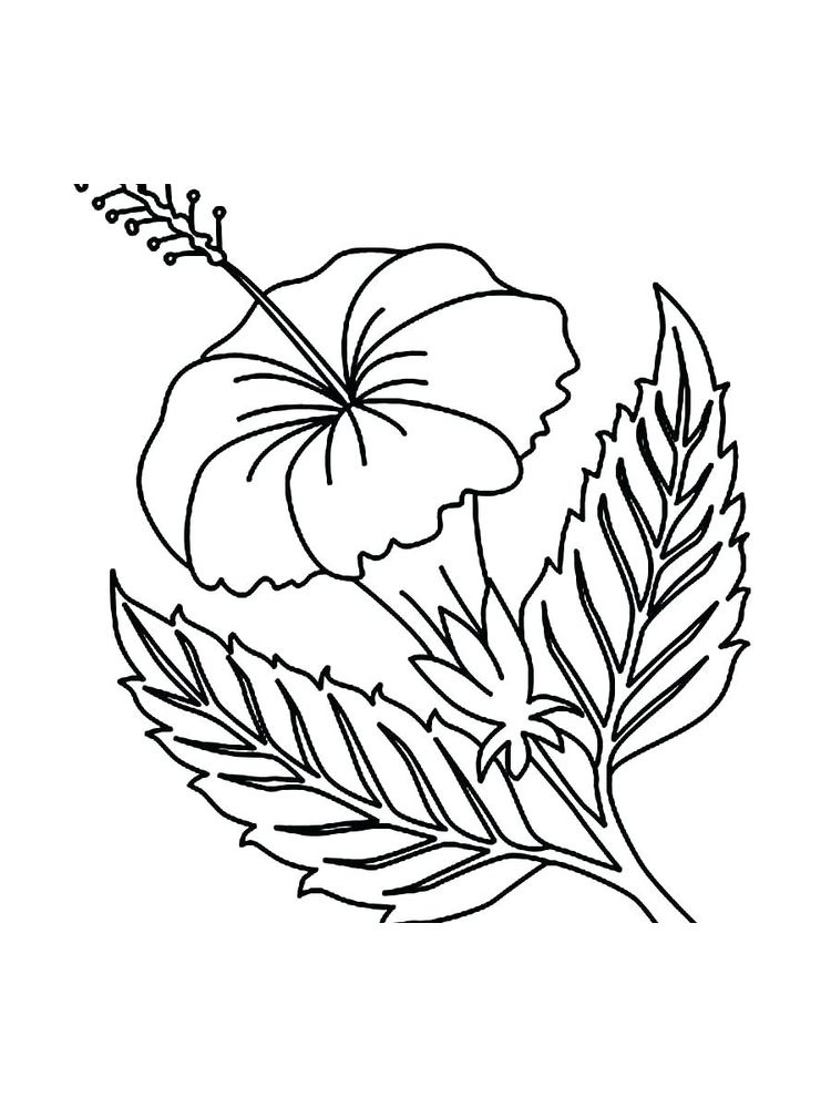 lima bean plant coloring page printable