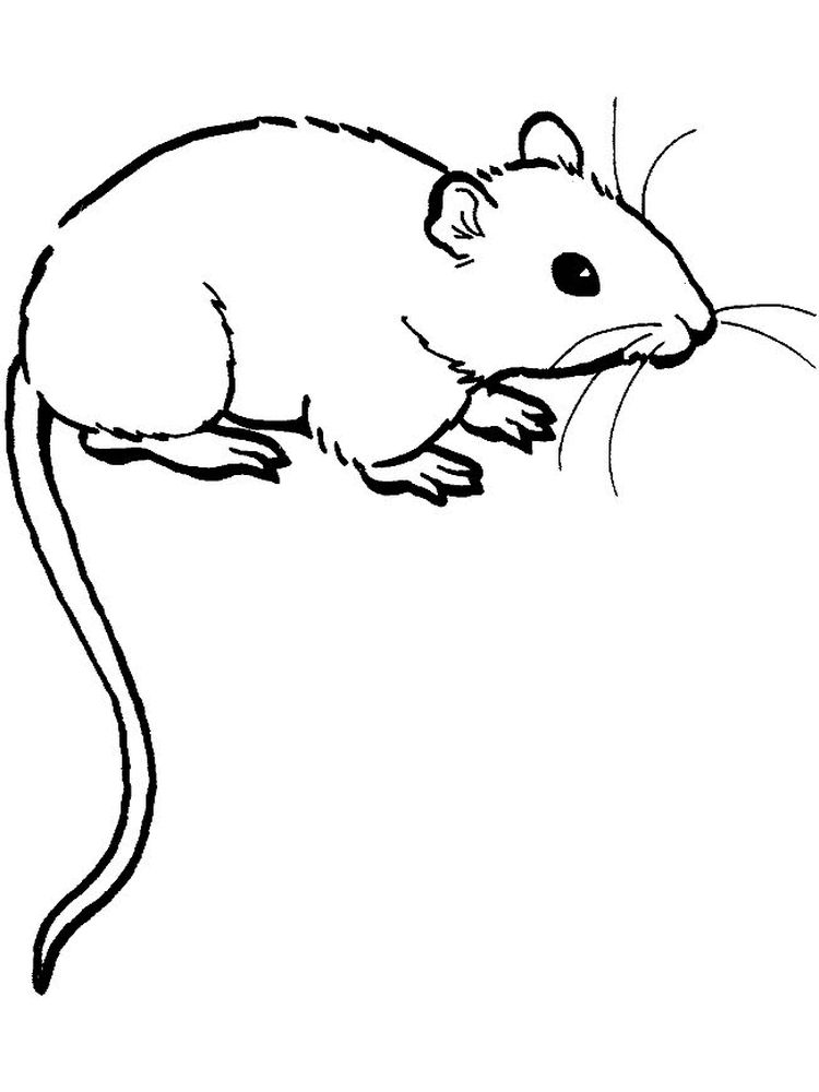 mouse coloring page with name printable