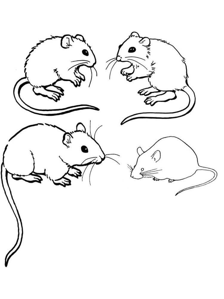 mouse coloring printable pages free