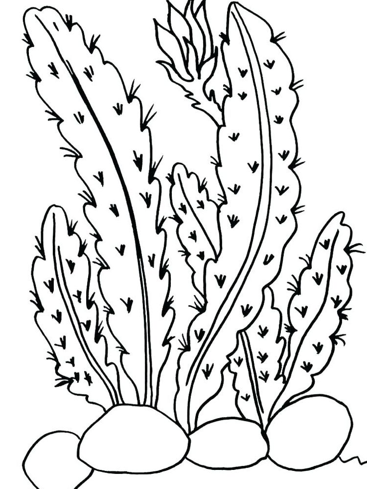 parts of a plant coloring page printable
