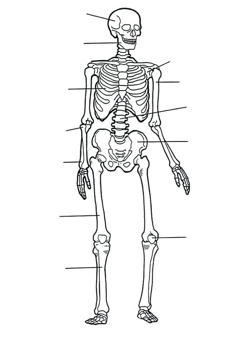 pirate skeleton coloring pages to print Printable