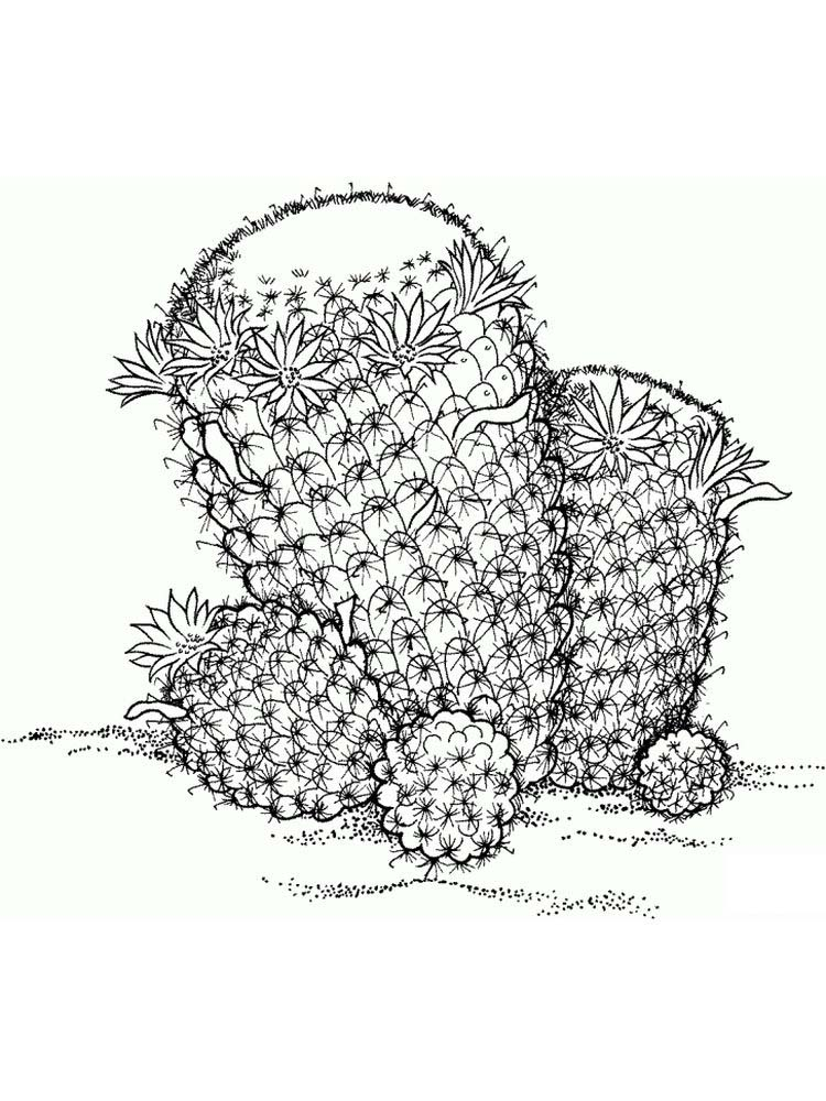 plant and animal cell coloring page Print