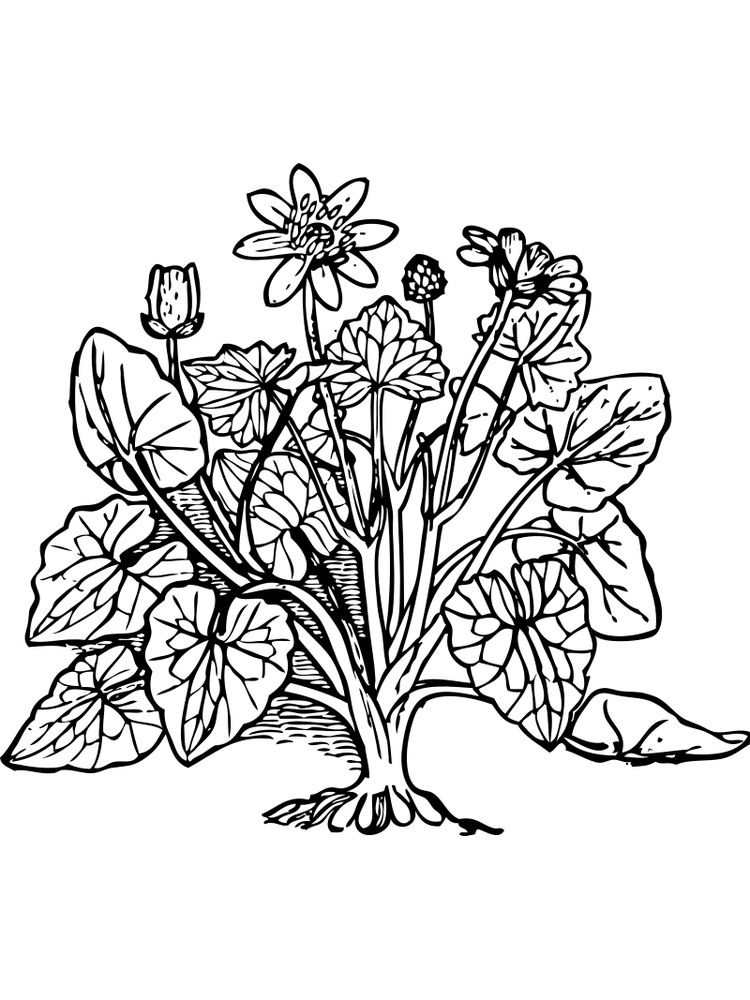 plant cell coloring page pdf printable