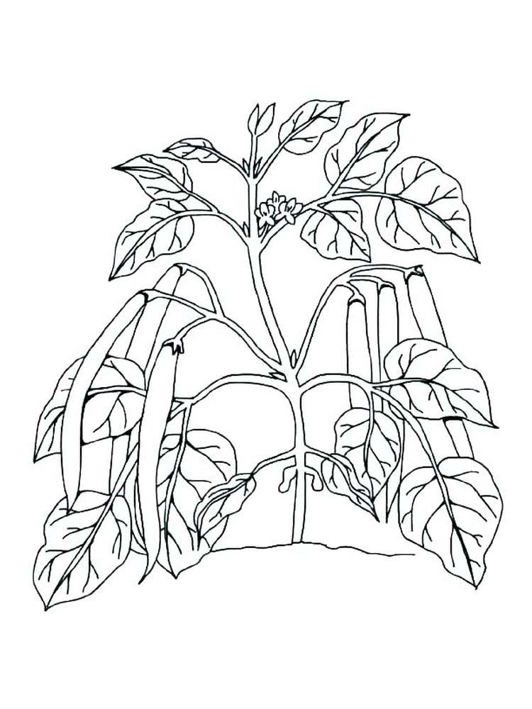 plant cell coloring page with labels printable