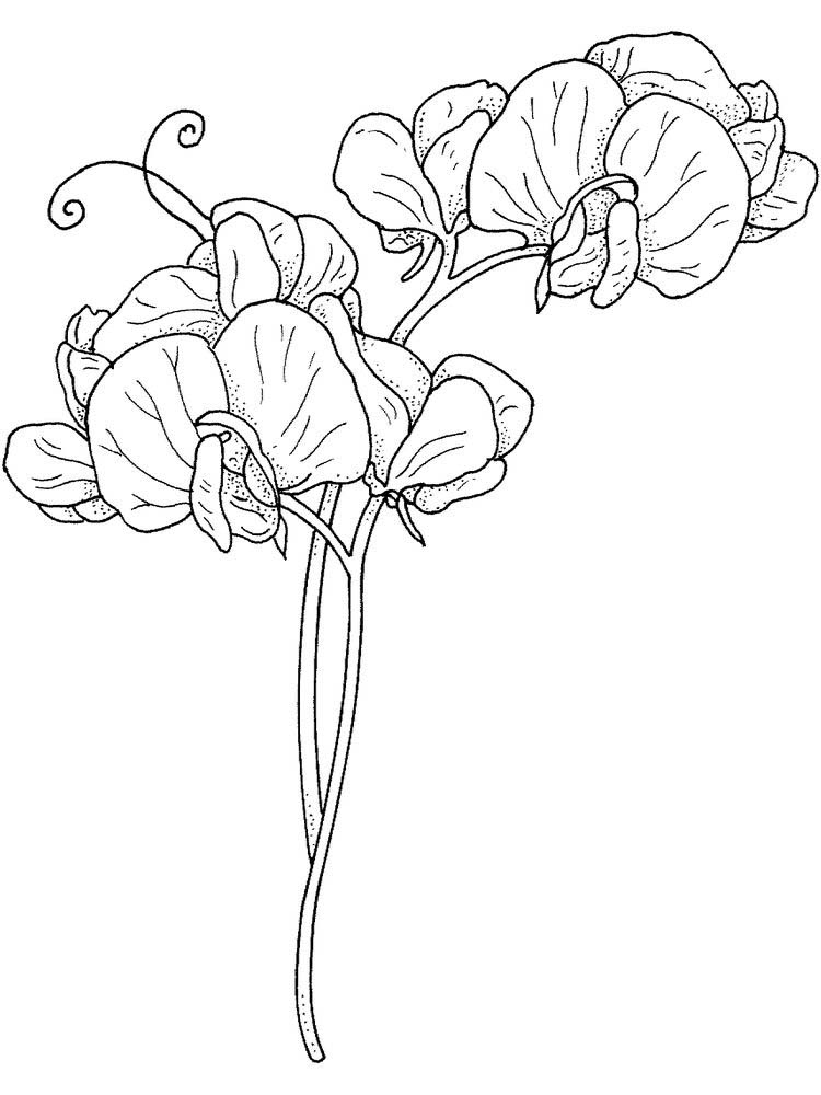 plant cell coloring pages printable