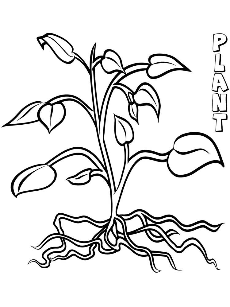 plant coloring page printable