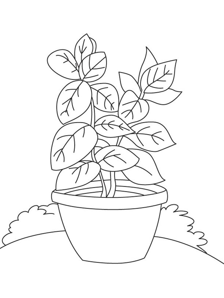 plant coloring pages for preschoolers printable