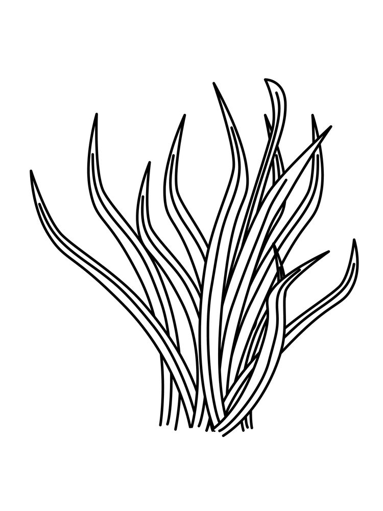 plant coloring pages pdf printable