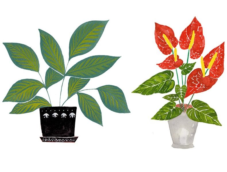 plant coloring