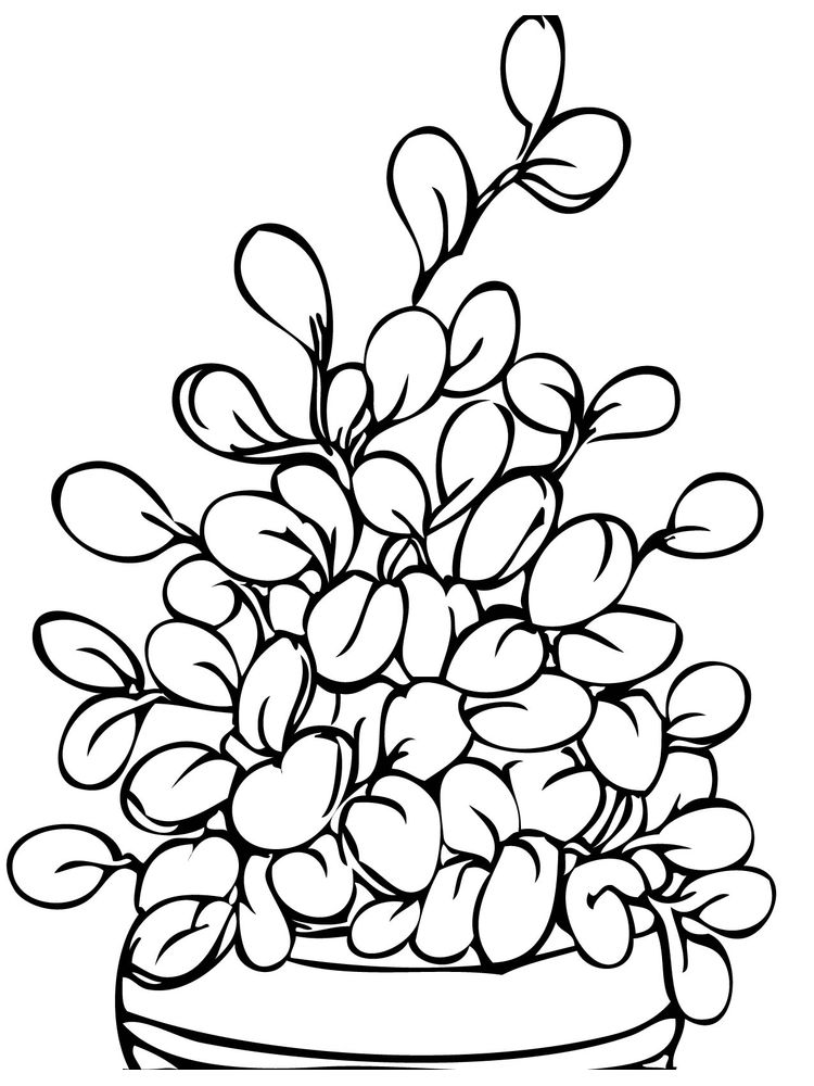 plant cycle coloring page printable