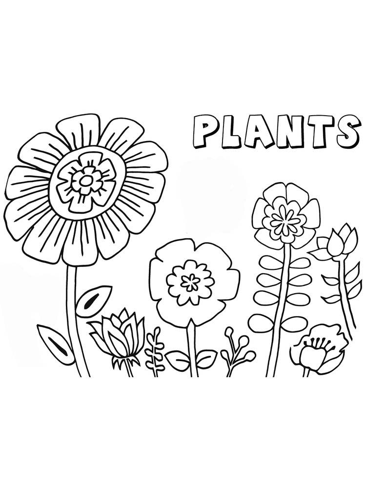 plant parts coloring pages printable